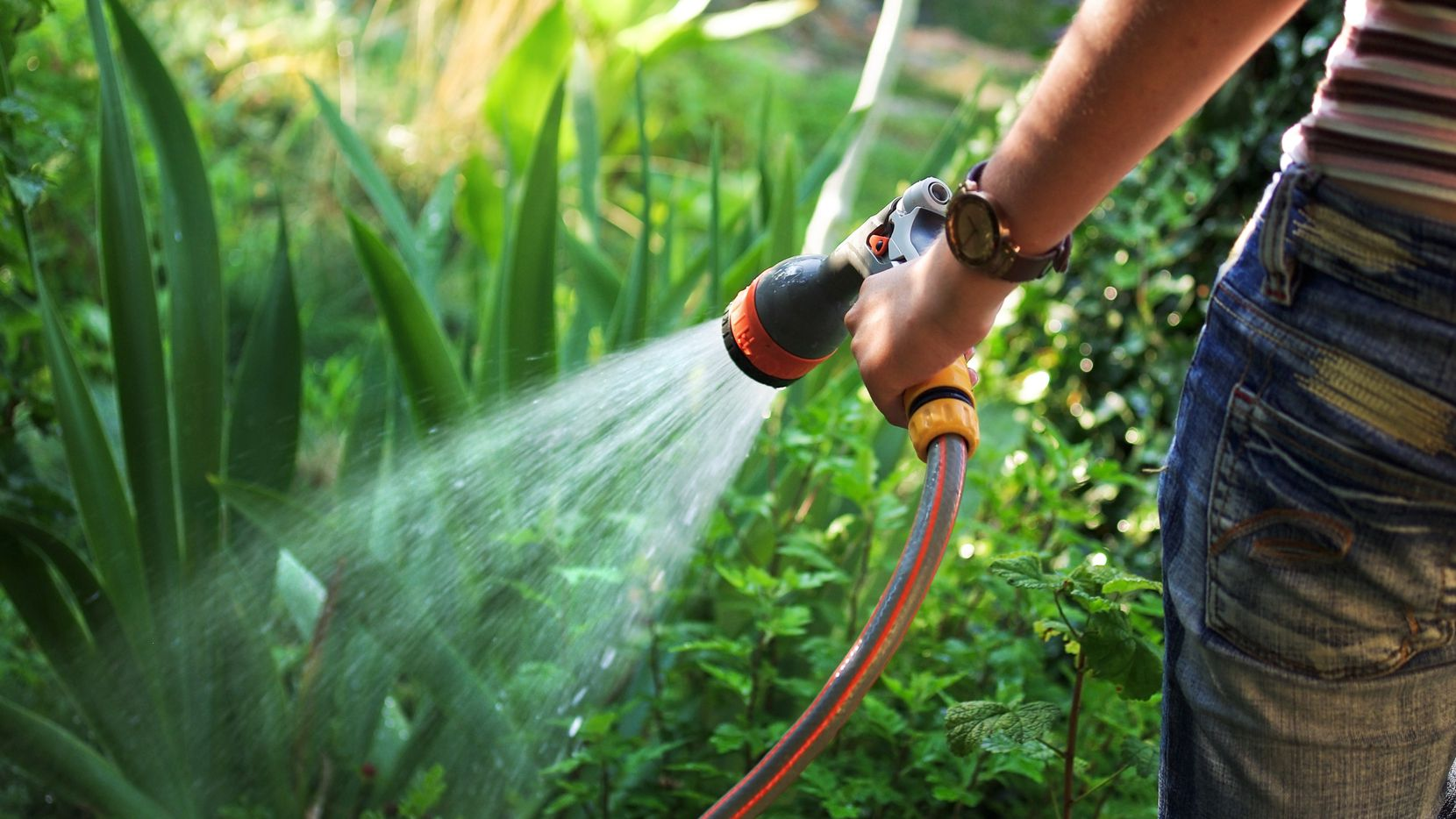 Watering sustainable garden